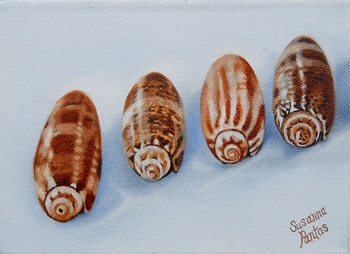 Commission Olive Shells by Susanna Pantas
