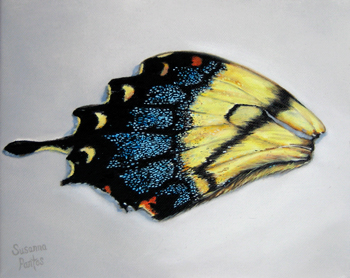 Contemplation: Memory of Tiger Swallowtail