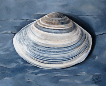 Contemplation: Surf Clam in Grays by Susanna Pantas