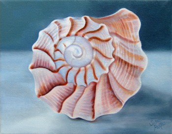 Contemplation: Spiral Conch on Gray by Susanna Pantas